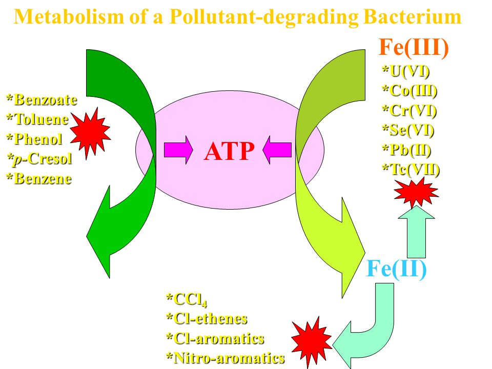 ATP Fe(III) CO2 Fe(II) Metabolism of a Pollutant-degrading Bacterium