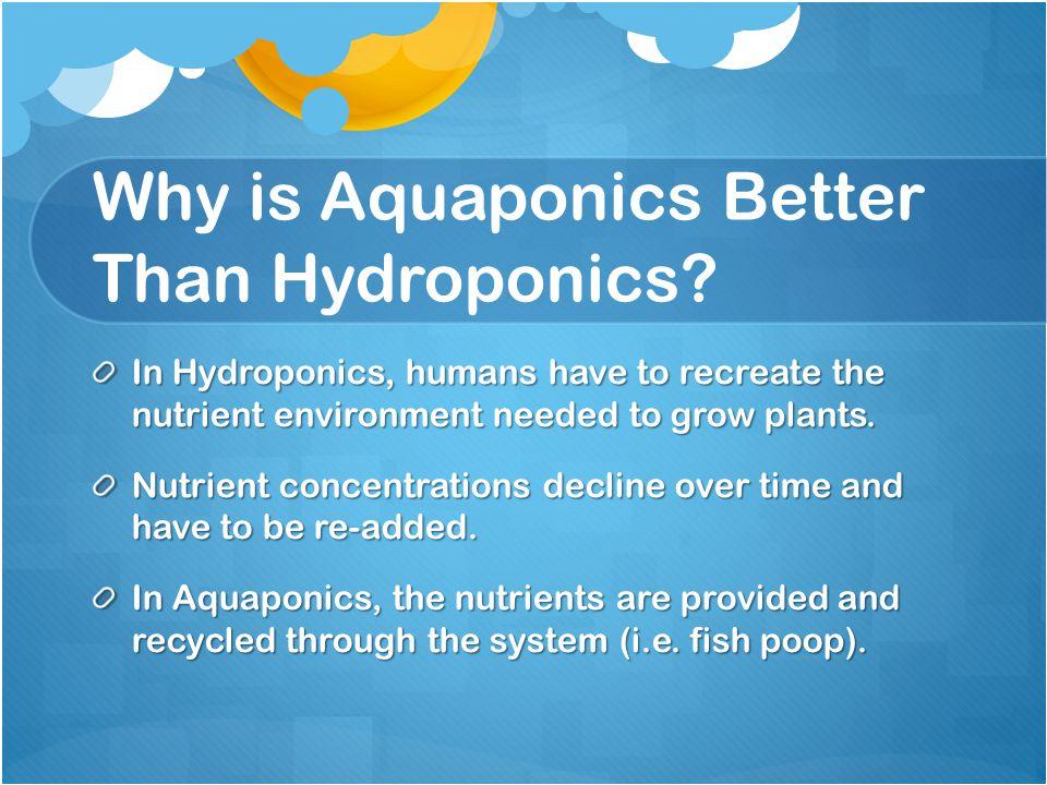 Why is Aquaponics Better Than Hydroponics