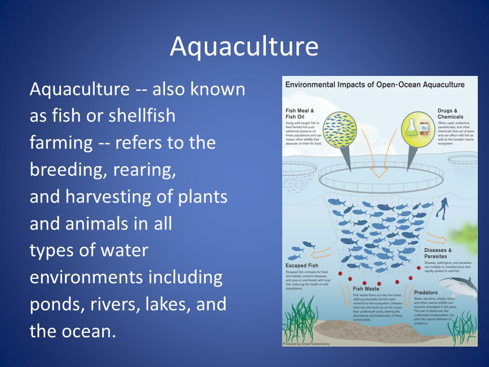 Aquaculture Aquaculture -- also known as fish or shellfish