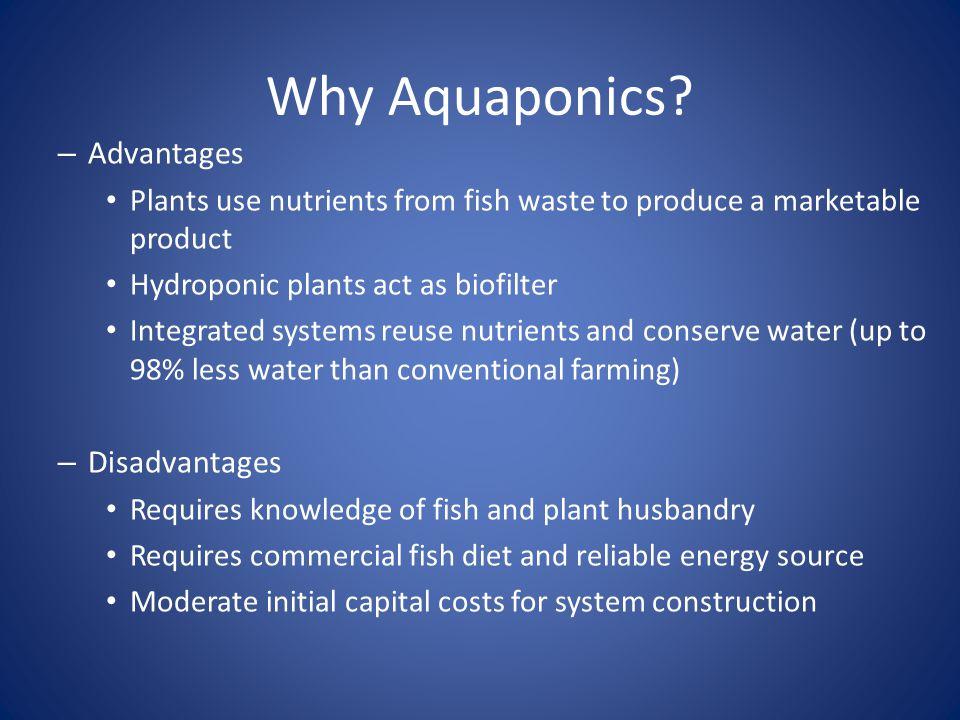 Why Aquaponics Advantages Disadvantages