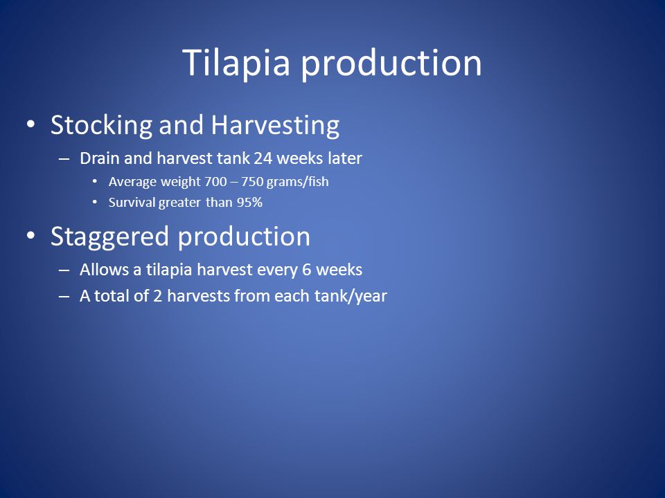 Tilapia production Stocking and Harvesting Staggered production