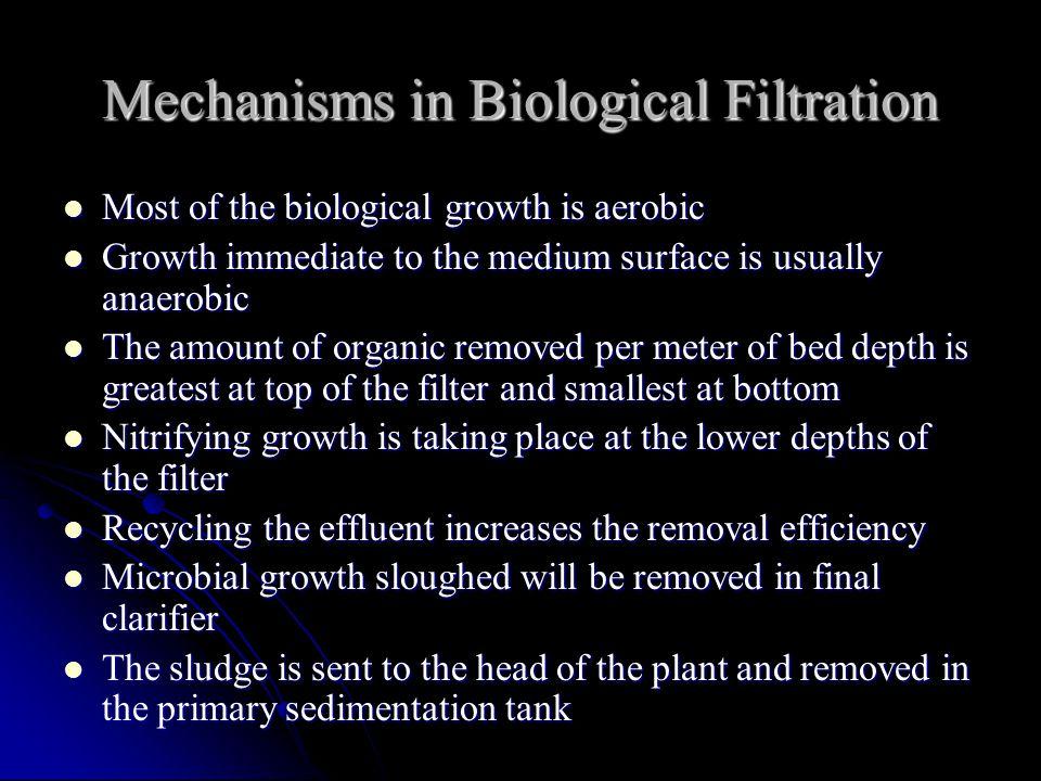 Mechanisms in Biological Filtration