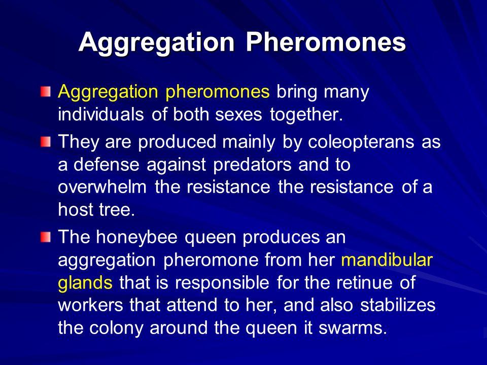 Aggregation Pheromones