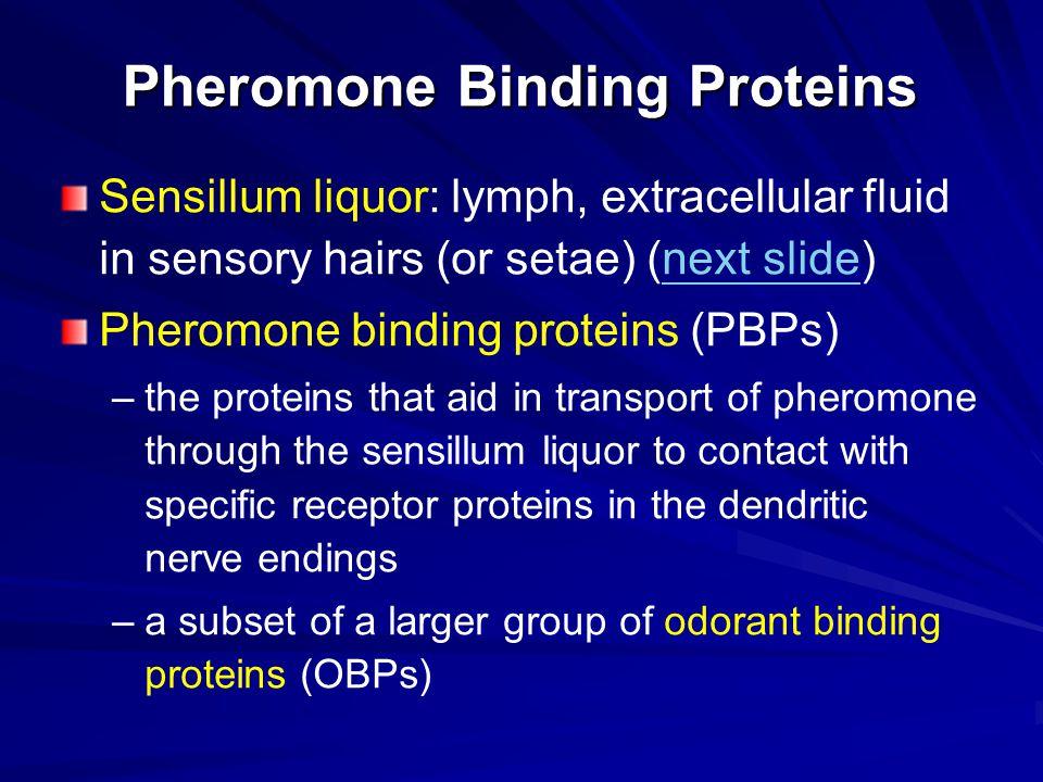 Pheromone Binding Proteins