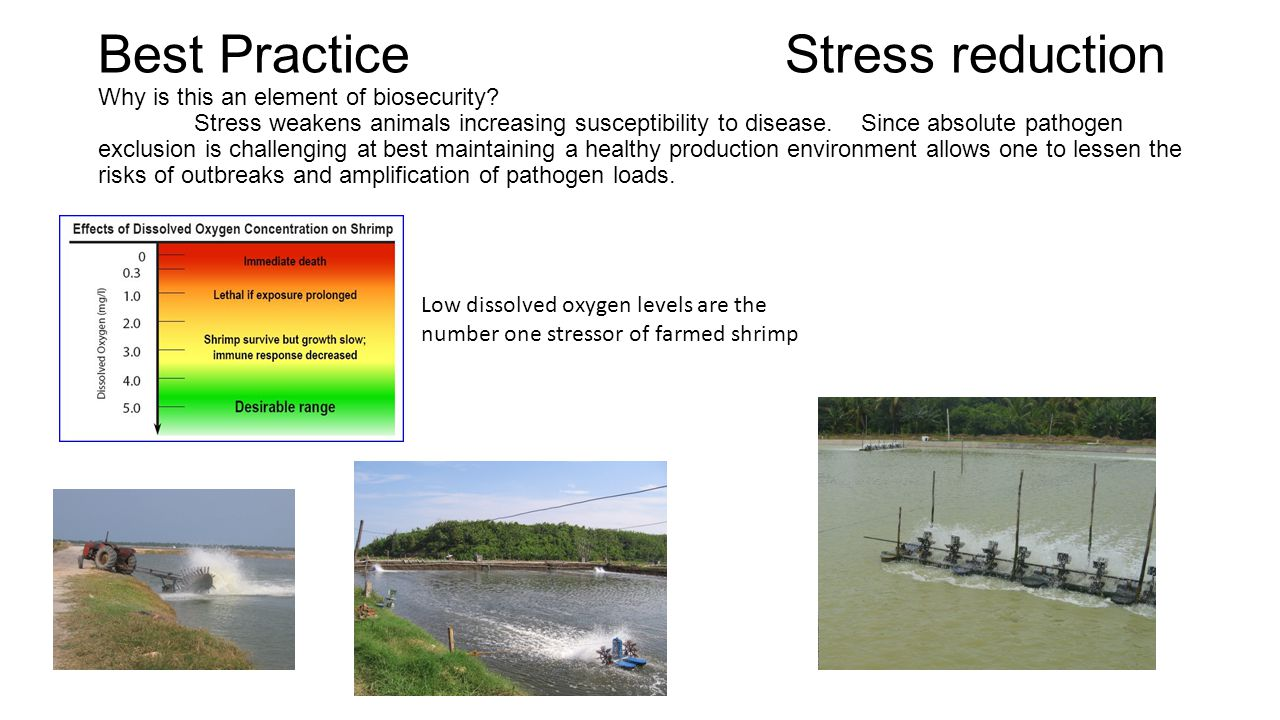 Best Practice. Stress reduction Why is this an element of biosecurity