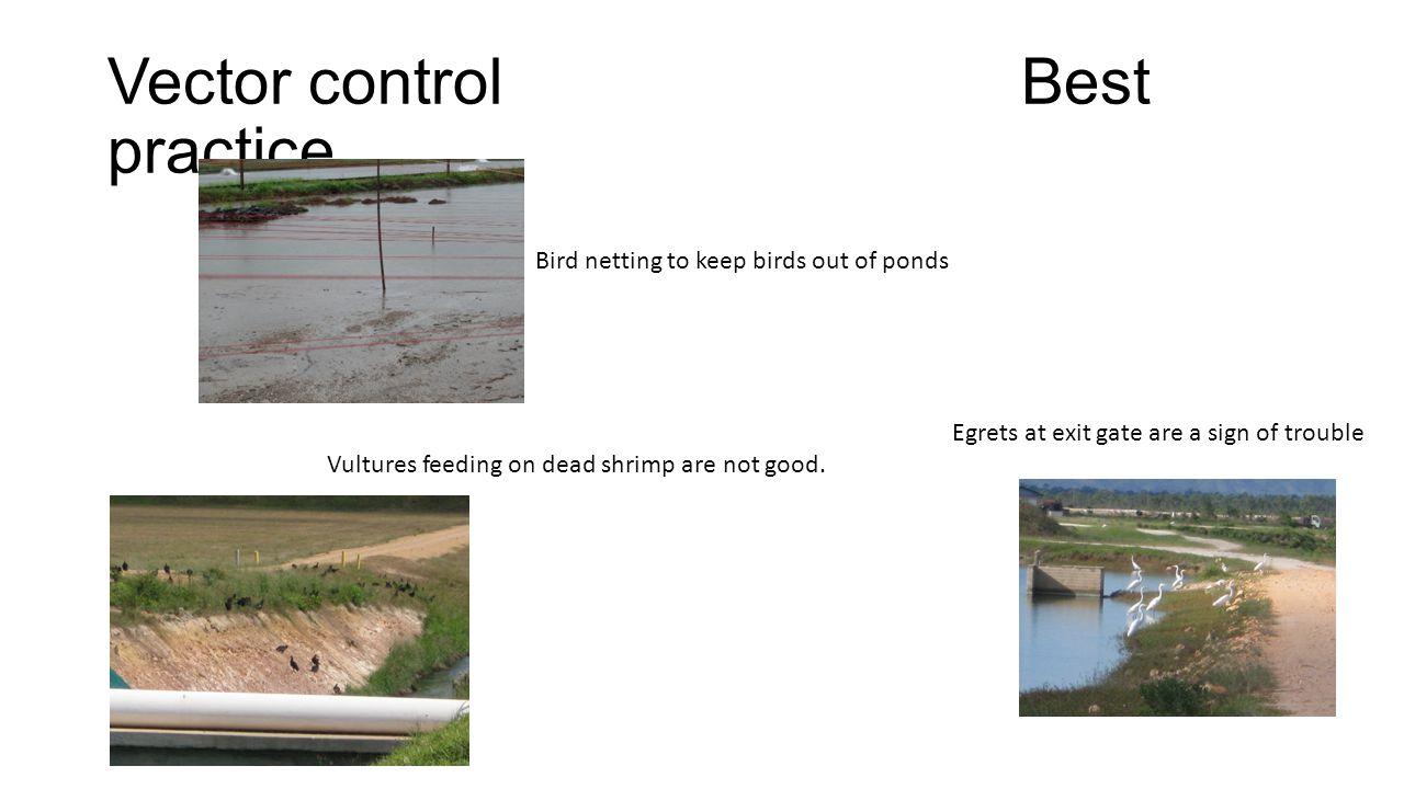 Vector control Best practice
