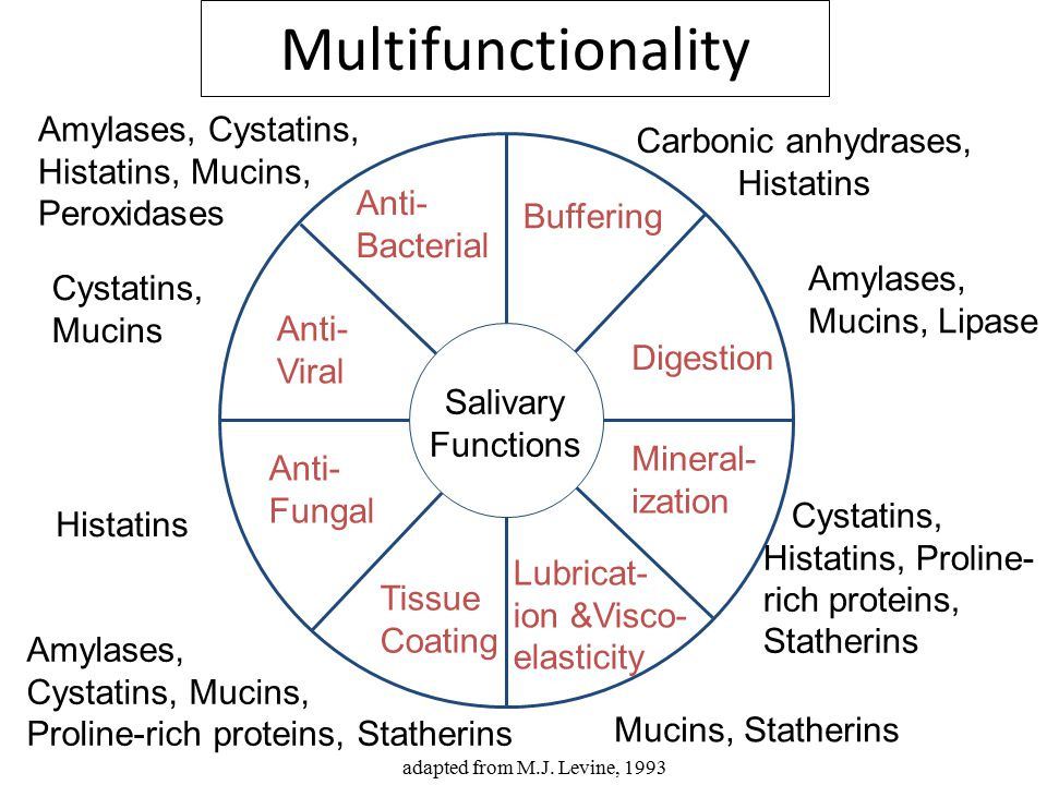 Multifunctionality Amylases, Cystatins, Carbonic anhydrases,