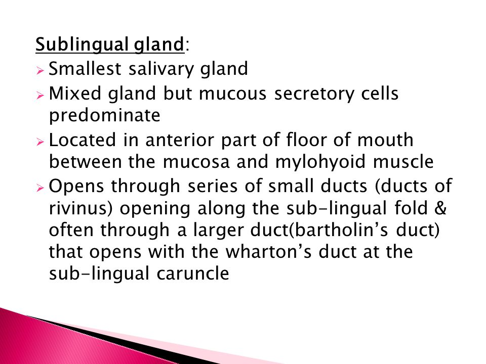 Sublingual gland: Smallest salivary gland. Mixed gland but mucous secretory cells predominate.