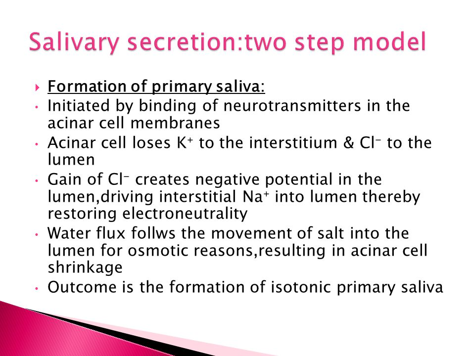 Salivary secretion:two step model