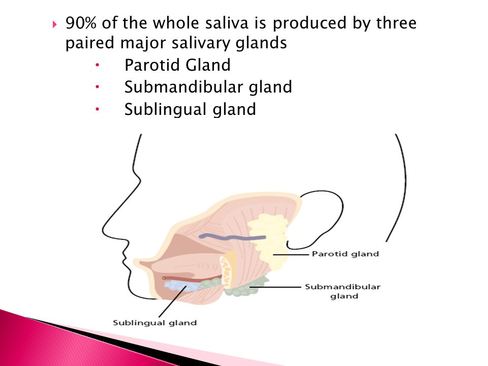 90% of the whole saliva is produced by three paired major salivary glands