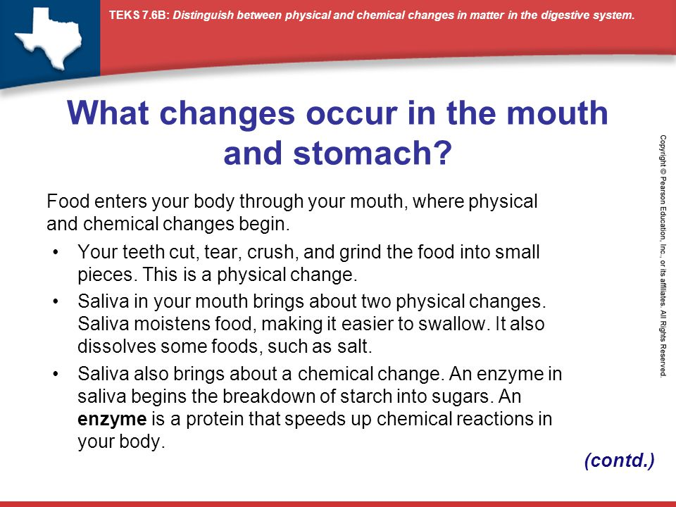 What changes occur in the mouth and stomach