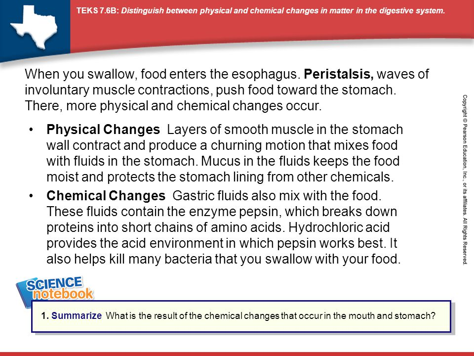 When you swallow, food enters the esophagus