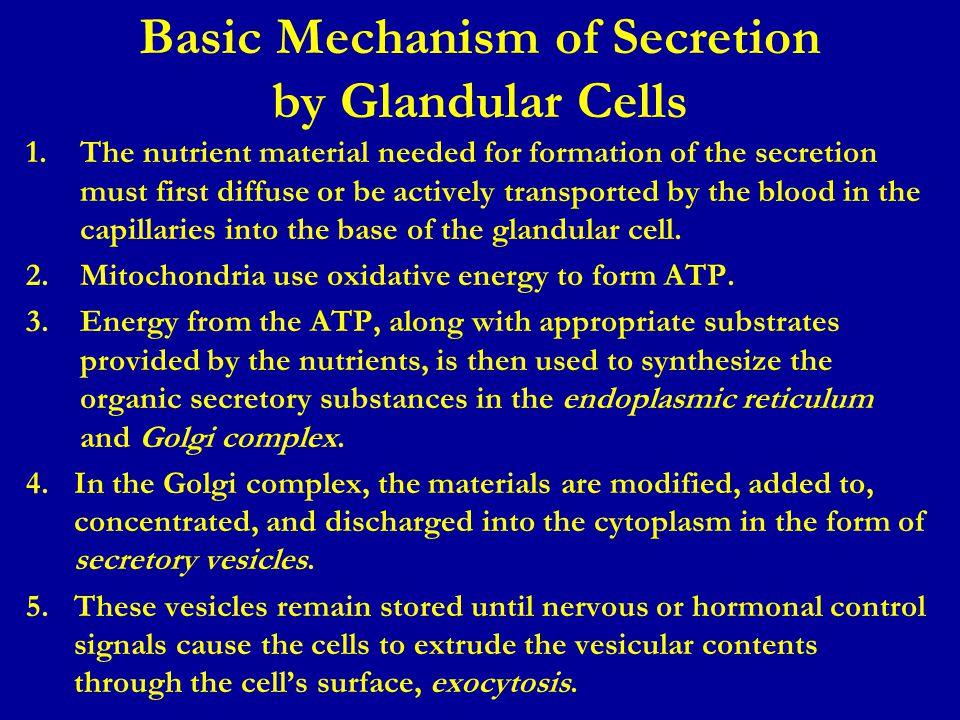 Basic Mechanism of Secretion by Glandular Cells