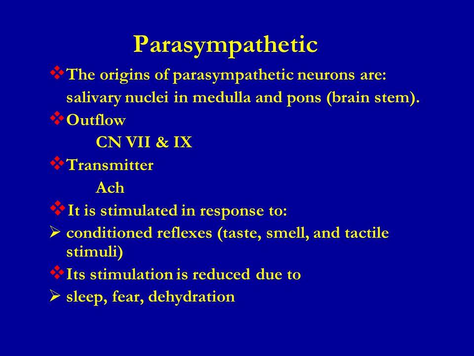 Parasympathetic The origins of parasympathetic neurons are: