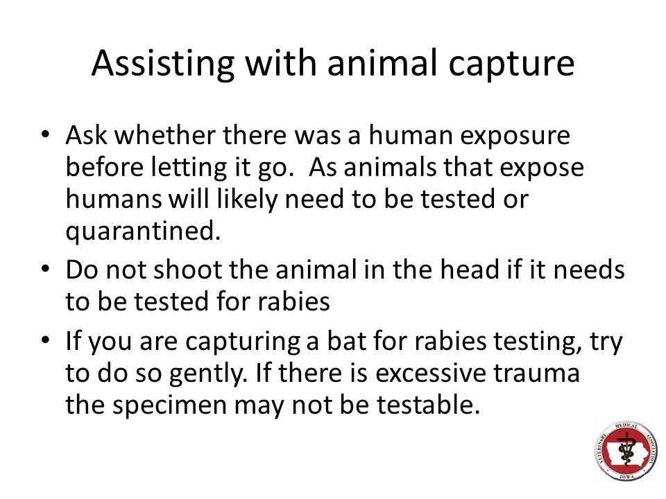 Assisting with animal capture