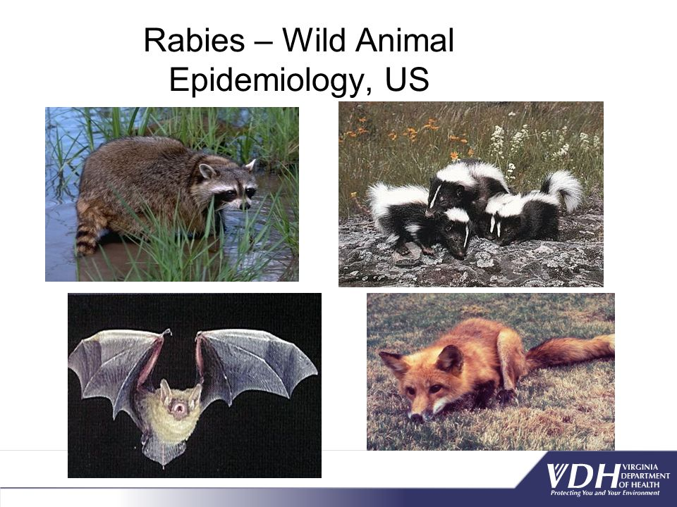Rabies – Wild Animal Epidemiology, US