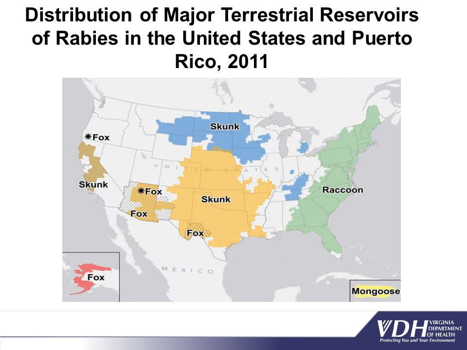 Distribution of Major Terrestrial Reservoirs of Rabies in the United States and Puerto Rico, 2011