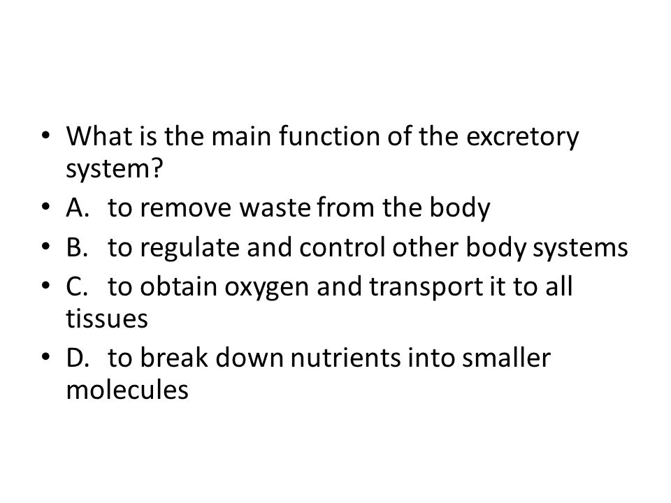 What is the main function of the excretory system