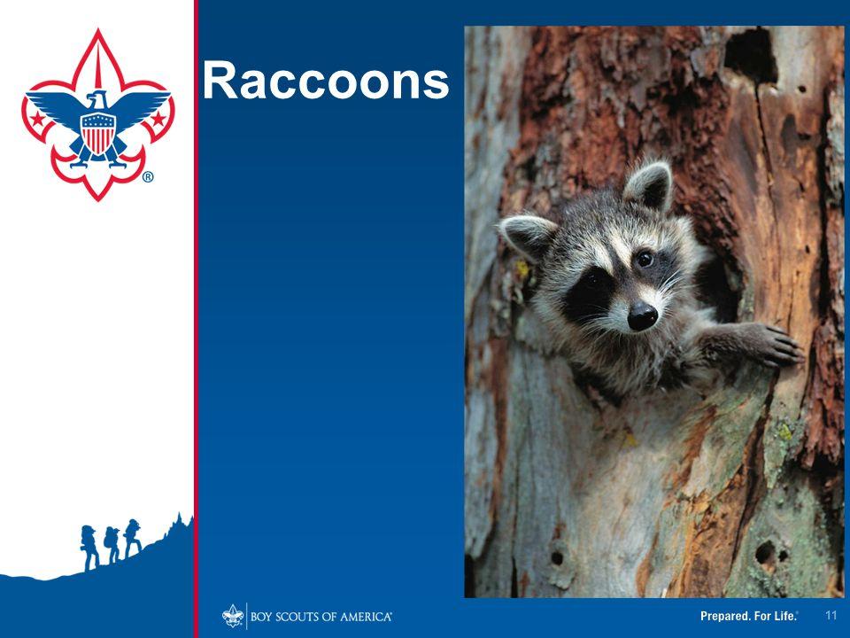 4/12/2017 Raccoons.