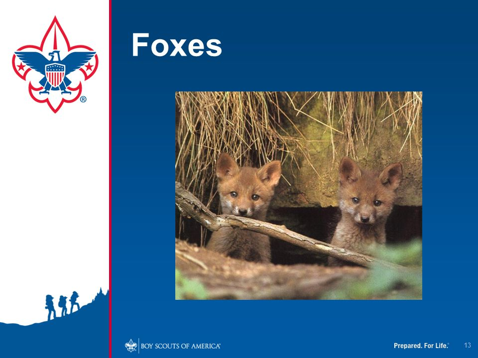 4/12/2017 Foxes. In Virginia, about 70 foxes are diagnosed with rabies every year.