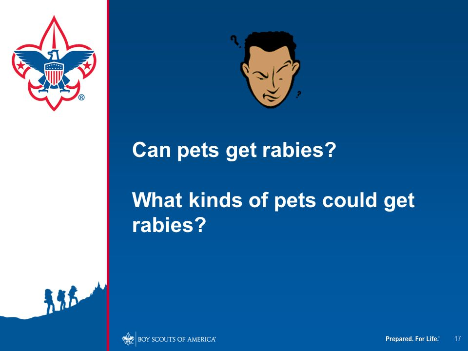 Can pets get rabies What kinds of pets could get rabies