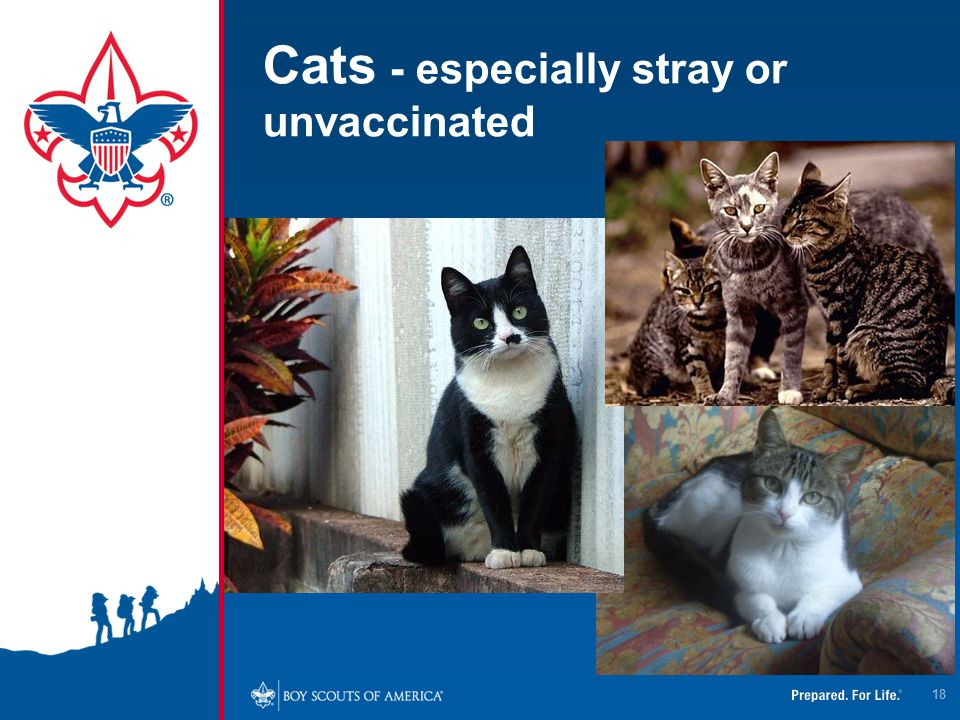 Cats - especially stray or unvaccinated