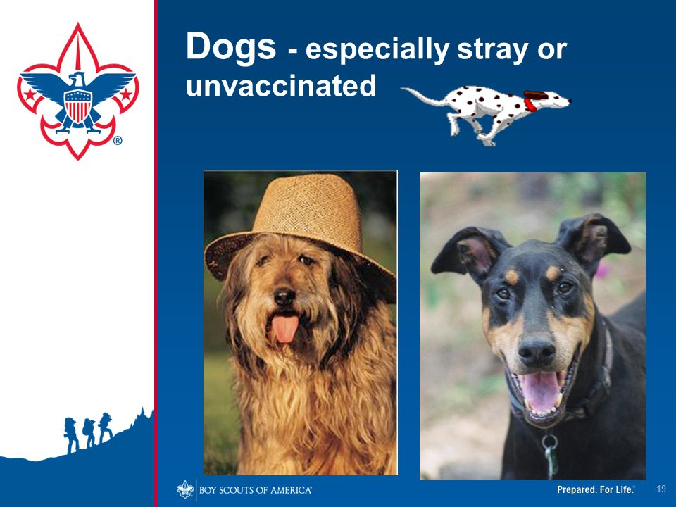 Dogs - especially stray or unvaccinated