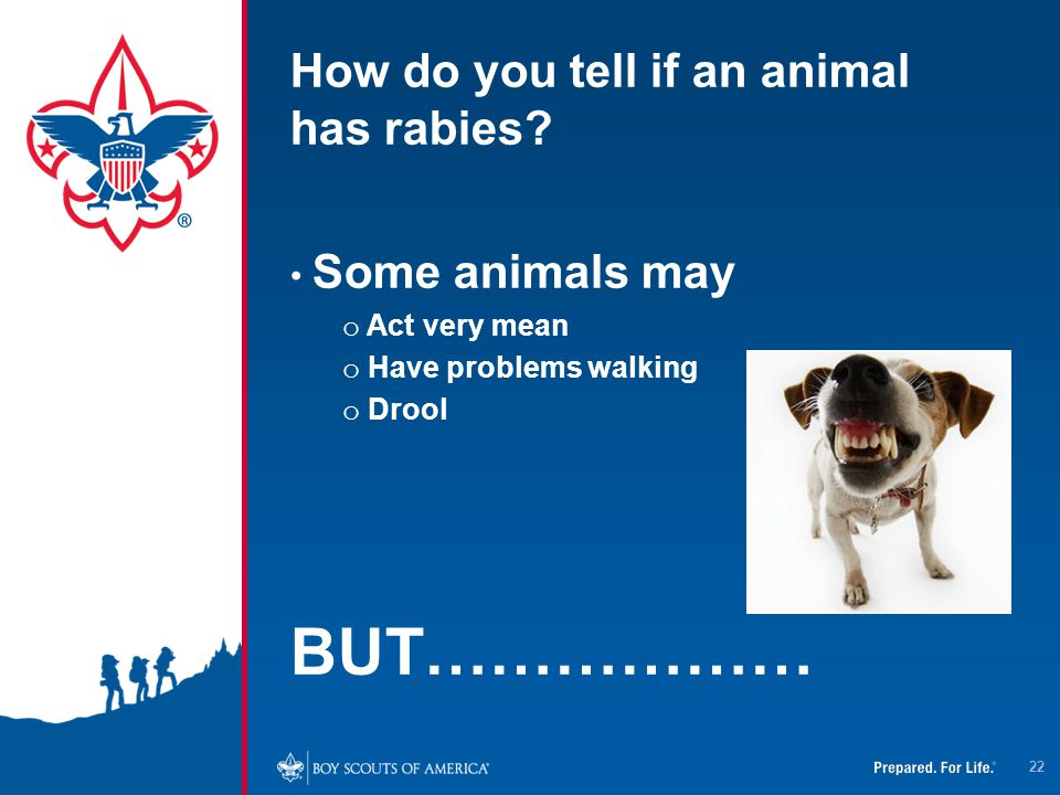 How do you tell if an animal has rabies