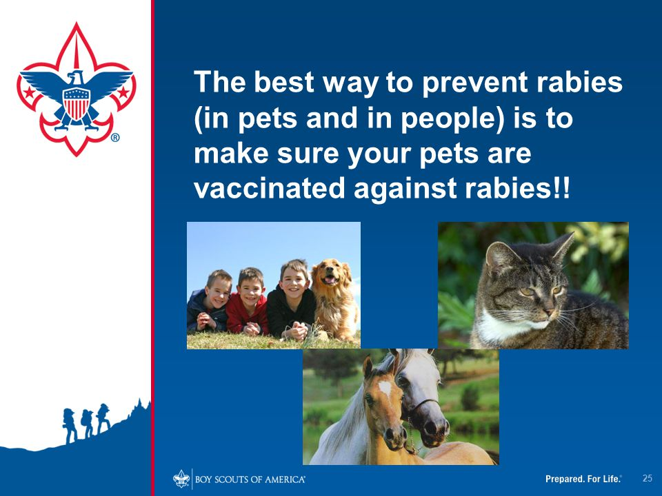 4/12/2017 The best way to prevent rabies (in pets and in people) is to make sure your pets are vaccinated against rabies!!