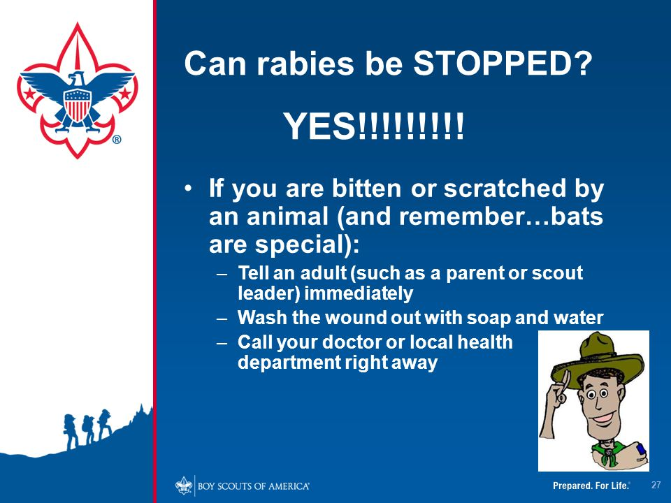 YES!!!!!!!!! Can rabies be STOPPED