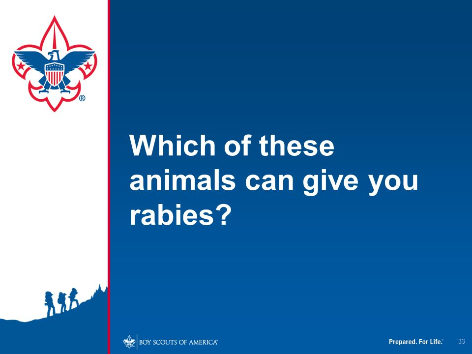 Which of these animals can give you rabies