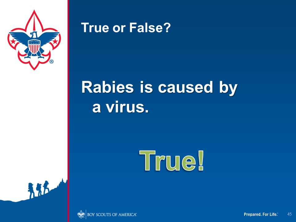 True or False Rabies is caused by a virus. True!