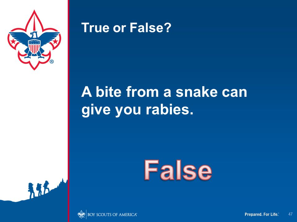 True or False A bite from a snake can give you rabies. False