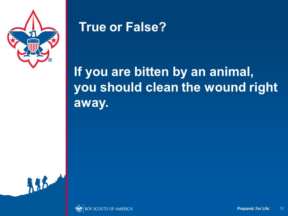 True or False If you are bitten by an animal, you should clean the wound right away.