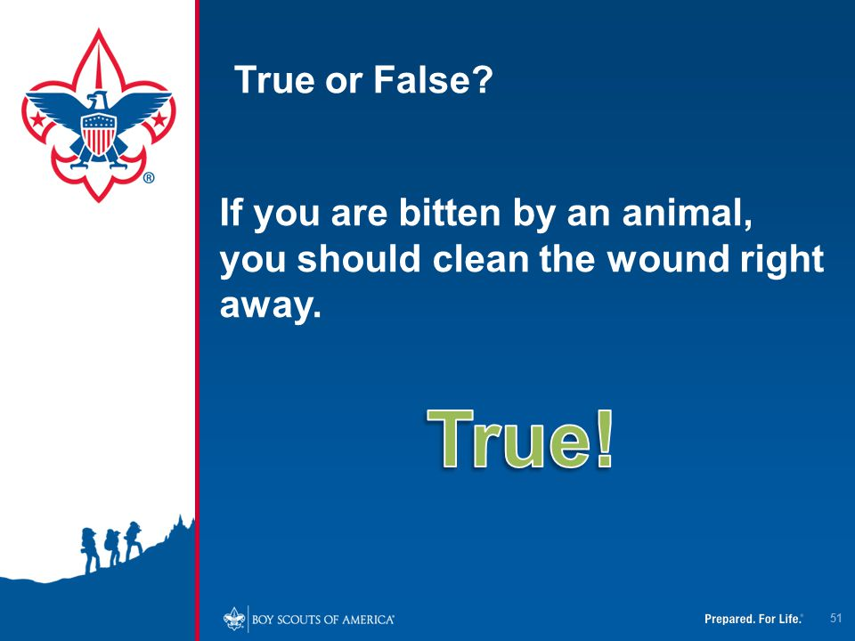 True or False If you are bitten by an animal, you should clean the wound right away. True!