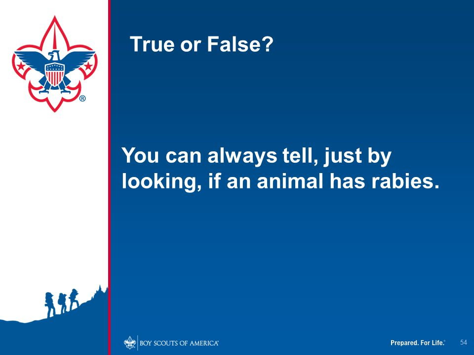 True or False You can always tell, just by looking, if an animal has rabies.
