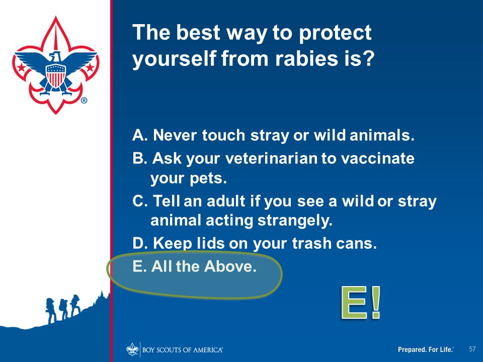 The best way to protect yourself from rabies is