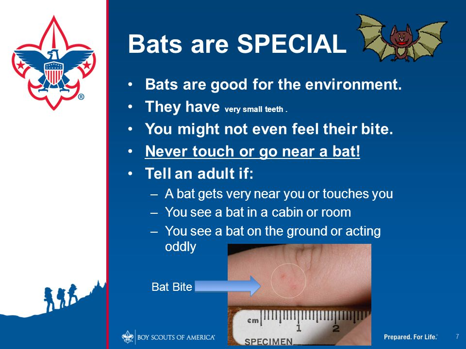Bats are SPECIAL Bats are good for the environment.