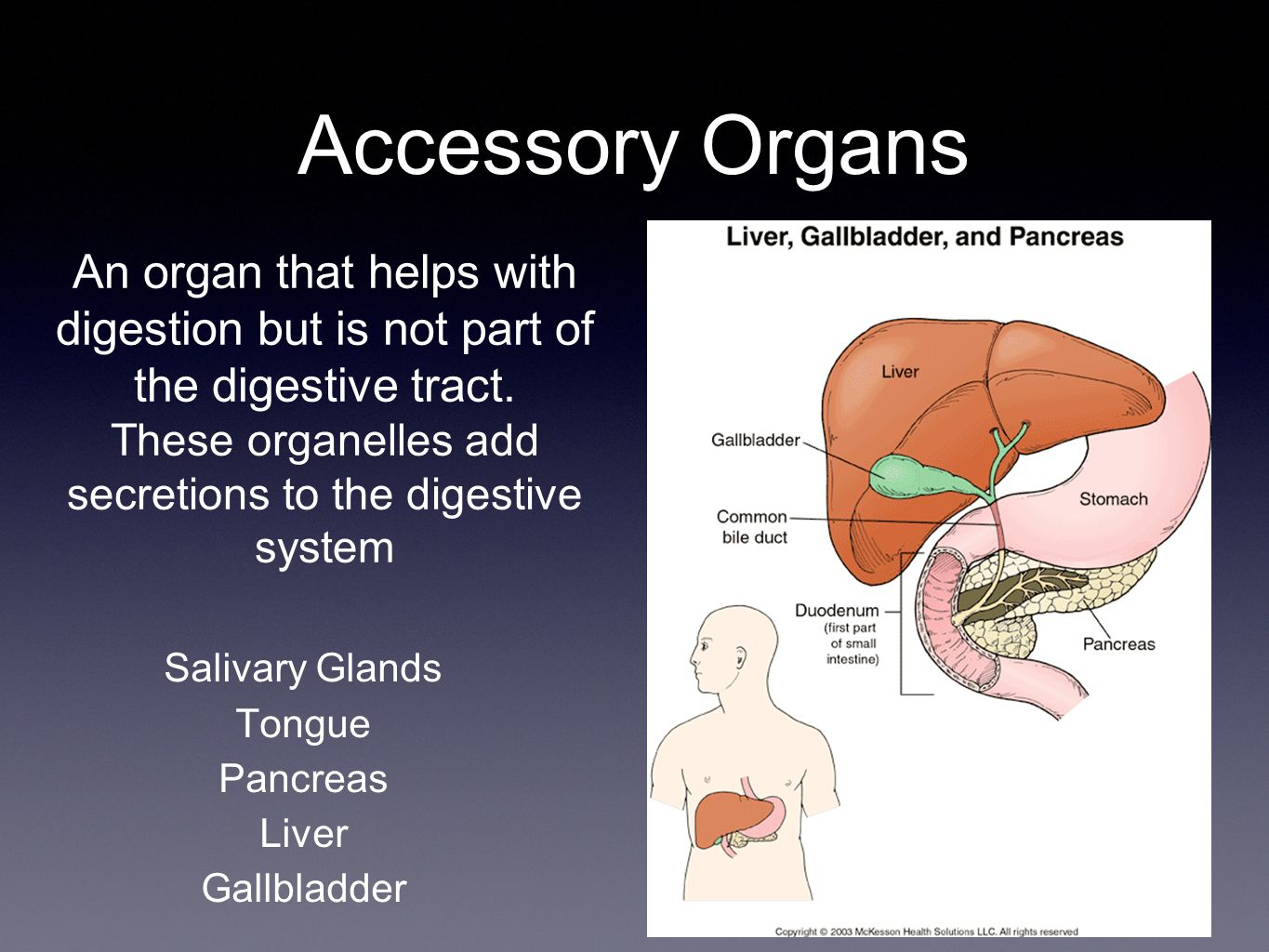 Accessory Organs An organ that helps with digestion but is not part of