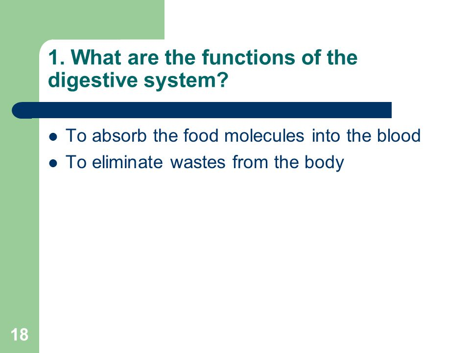 1. What are the functions of the digestive system
