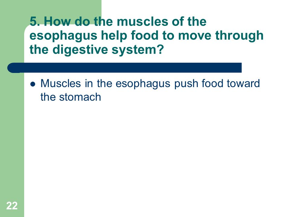 5. How do the muscles of the esophagus help food to move through the digestive system