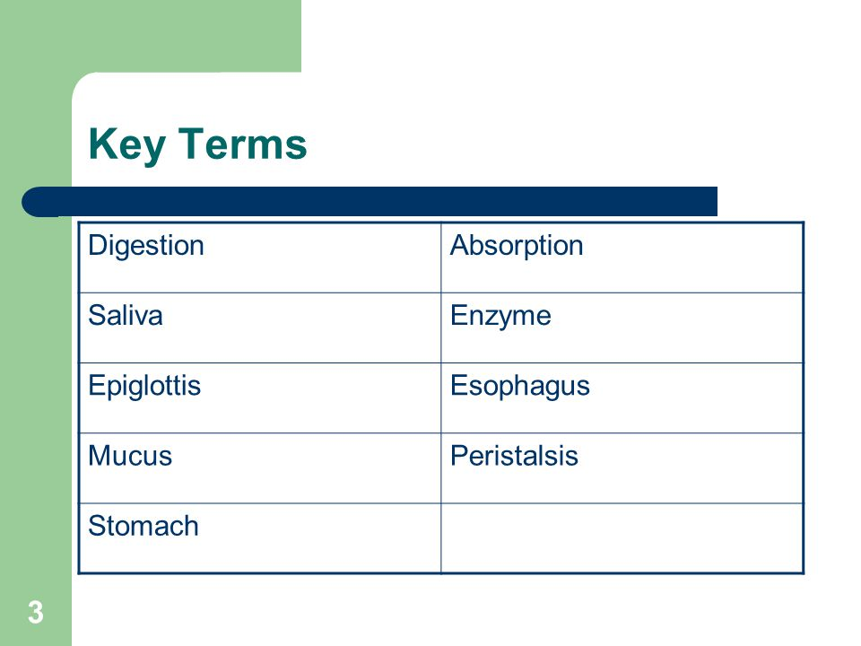 Key Terms Digestion Absorption Saliva Enzyme Epiglottis Esophagus
