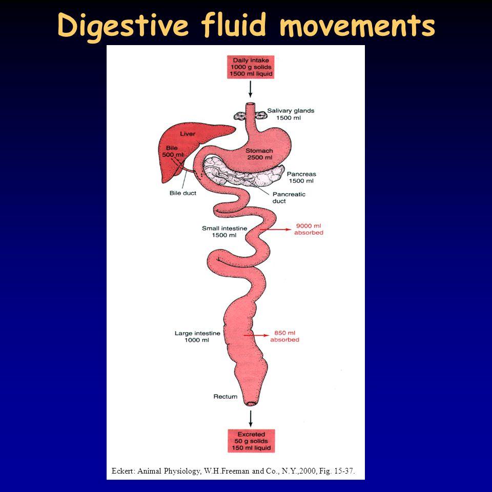 Digestive fluid movements