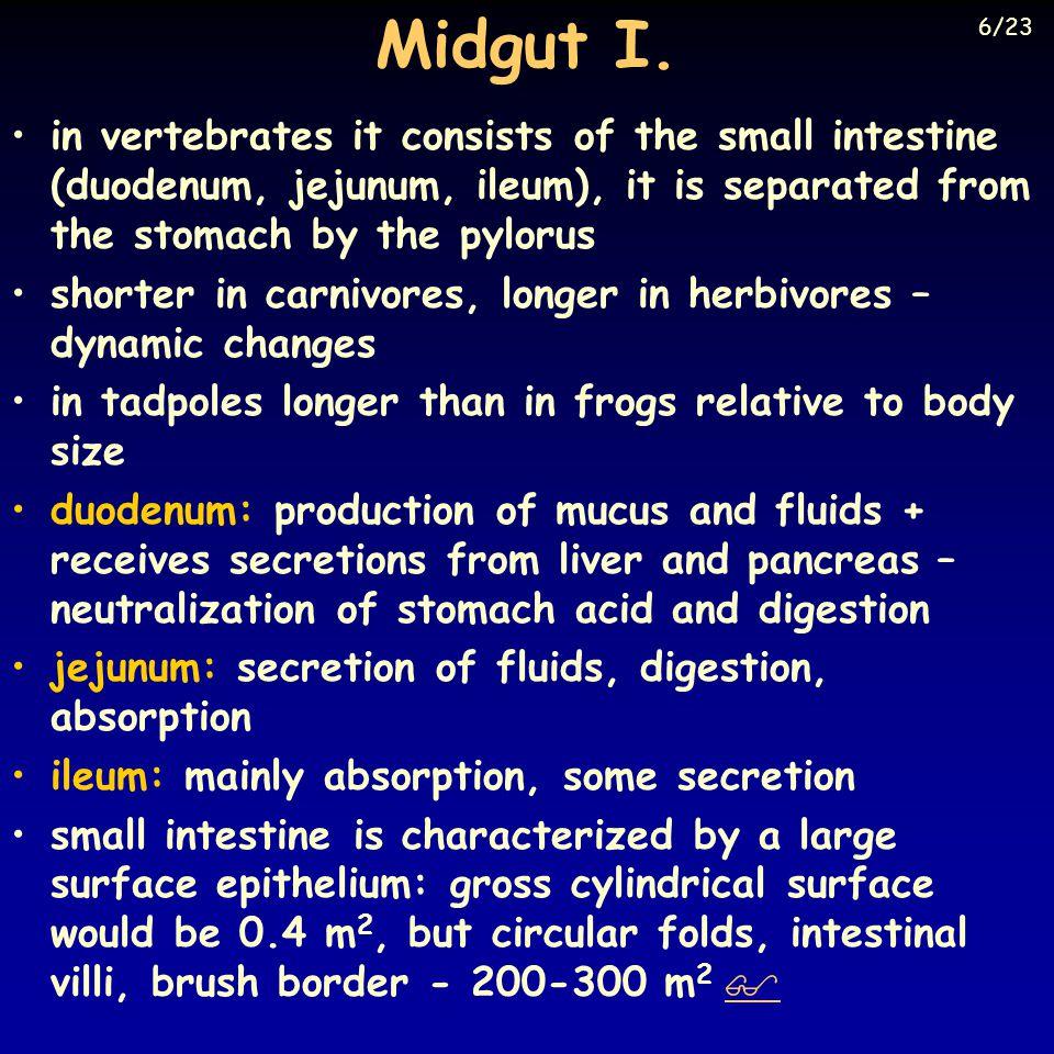 Midgut I. 6/23. Eckert: Animal Physiology, W.H.Freeman and Co., N.Y.,2000, Fig. 15-20.