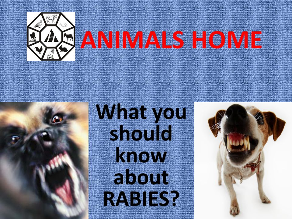 What you should know about RABIES