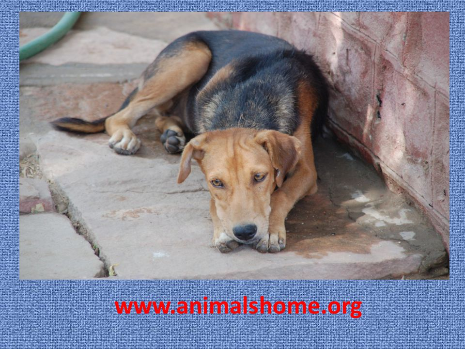 www.animalshome.org