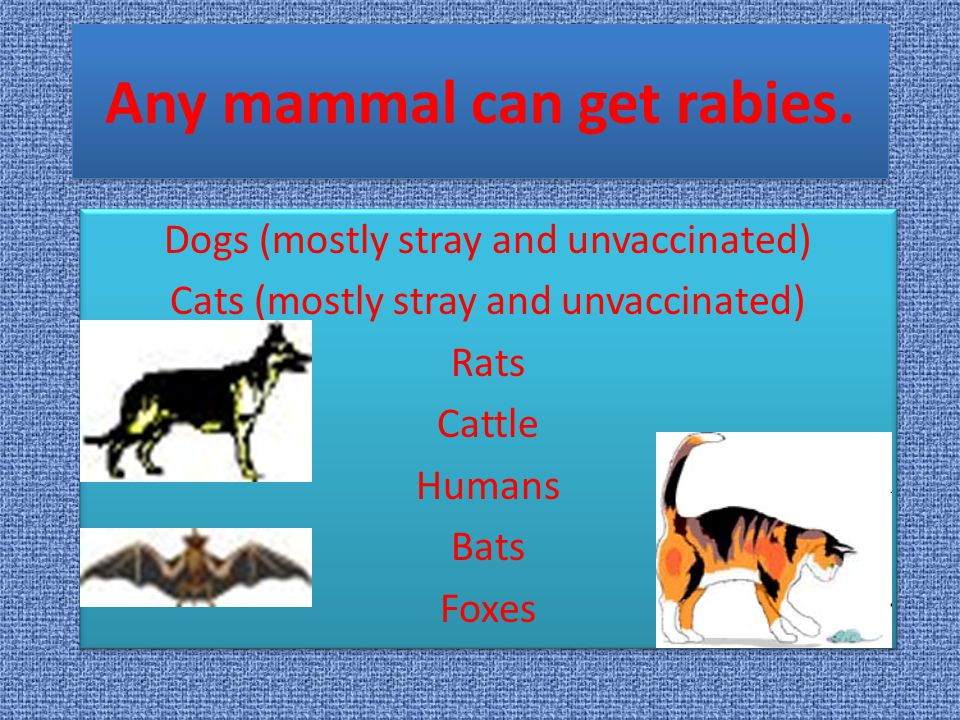 Any mammal can get rabies.