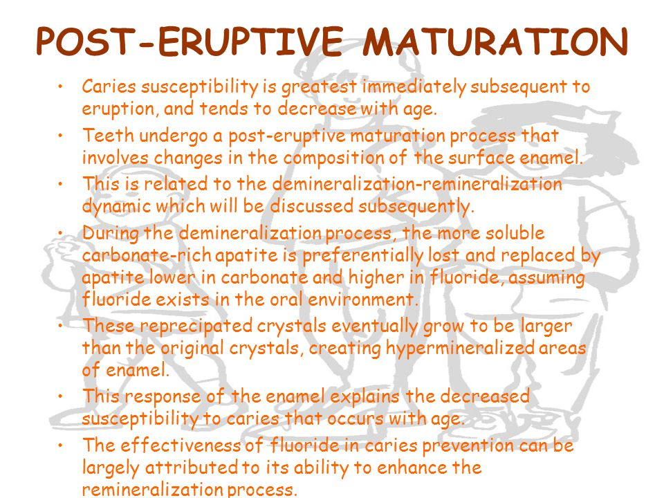 POST-ERUPTIVE MATURATION