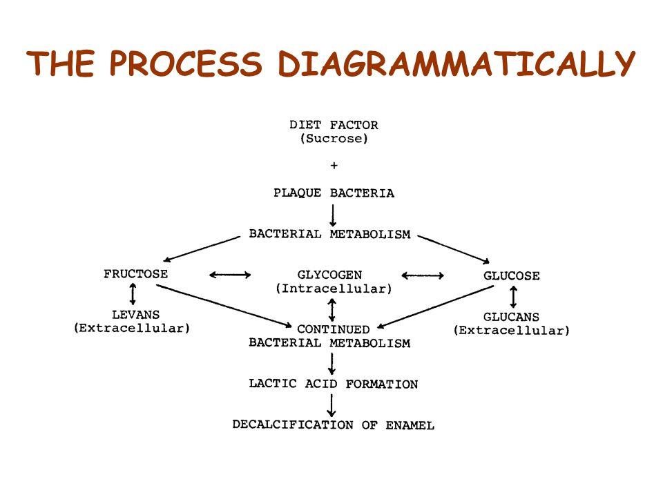 THE PROCESS DIAGRAMMATICALLY