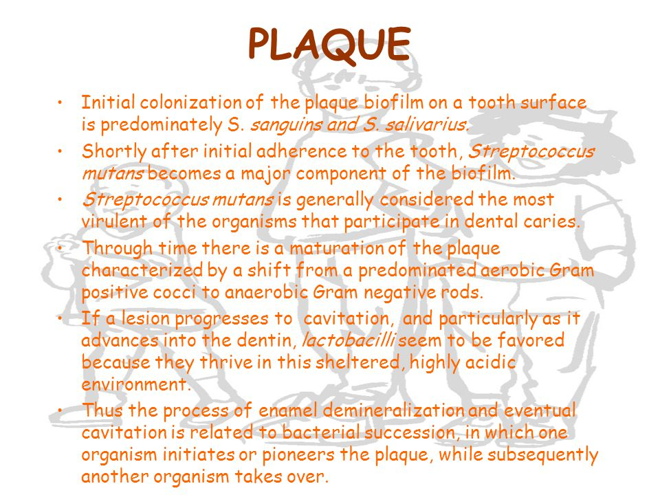 PLAQUE Initial colonization of the plaque biofilm on a tooth surface is predominately S. sanguins and S. salivarius.